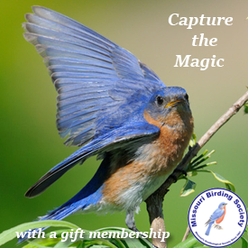 Give a gift of MBS membership