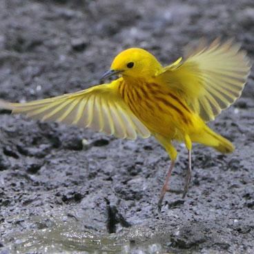 missouri and its birds